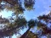 lesy Umbrie